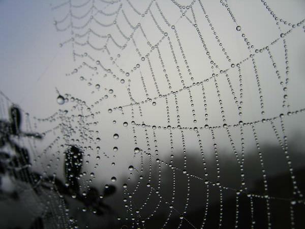 spider-19263_640-w600_mini